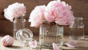 部屋のお花